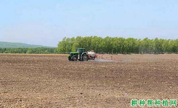 种植芝麻用什么土壤除草剂?