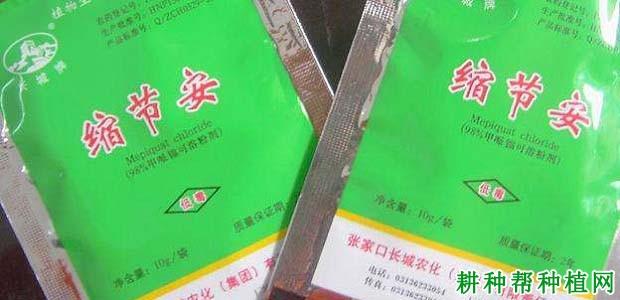 种植芝麻使用哪些农药可以增产?